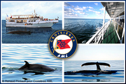 4 passes for a whale sight-seeing